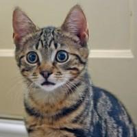 Import Cat News