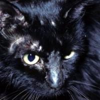 Cat_Ringworm