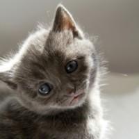 Cat Dandruff Clinic Kitty