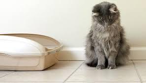 Cat Litter Box Defecting Outside Box