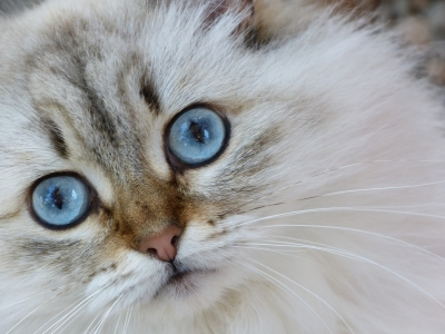 Dealing With Thyroid Problems In Cats