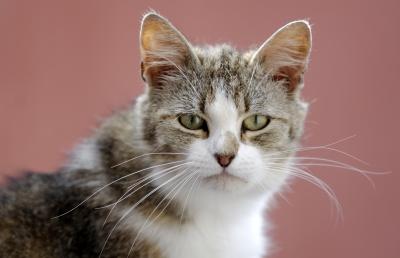 Rabies symptoms in cats cdc
